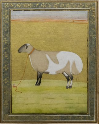 Portrait of a fat tailed sheep. Late 17th century A.D.