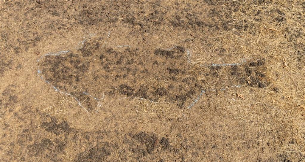 Shark petroglyph at Barsu Sada