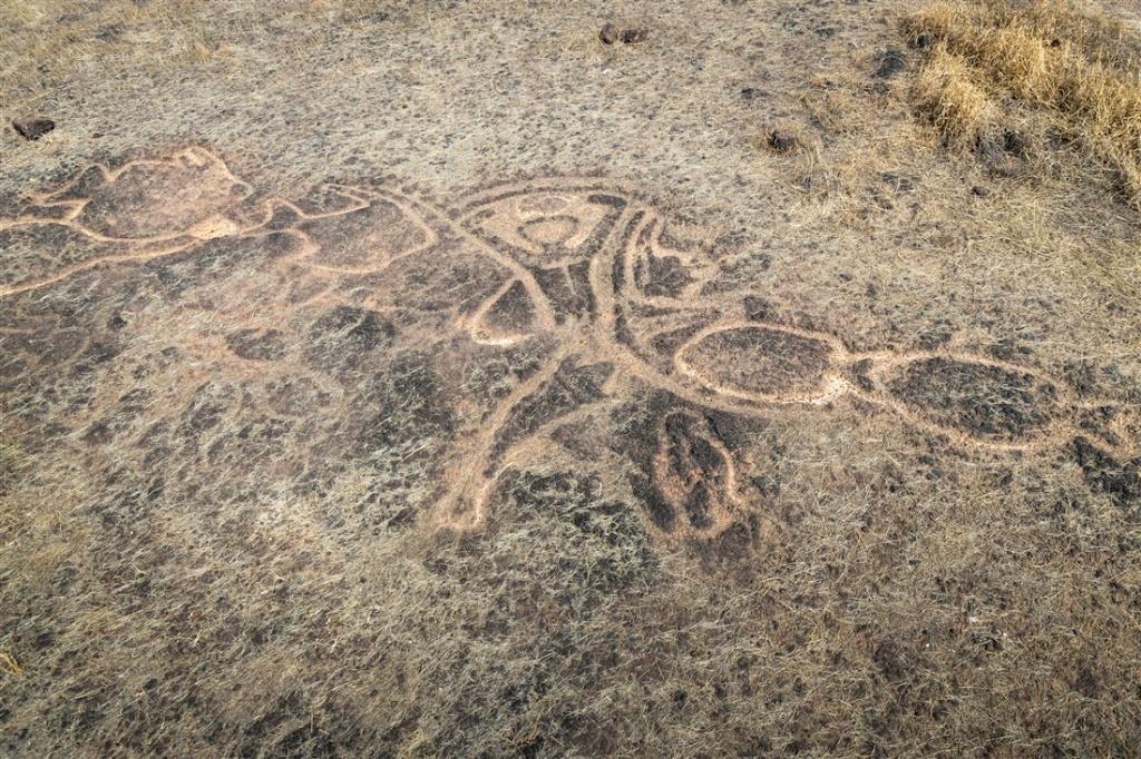 Petroglyph of a human with fish, aquatic mammals, and a bird - Barsu Sada
