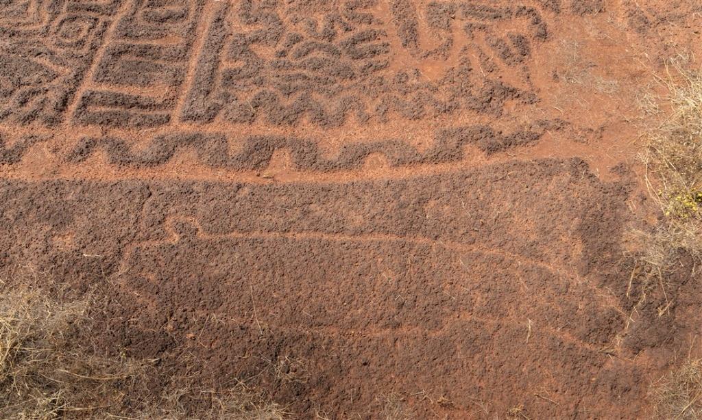Sea cucumber - Niwale petroglyphs