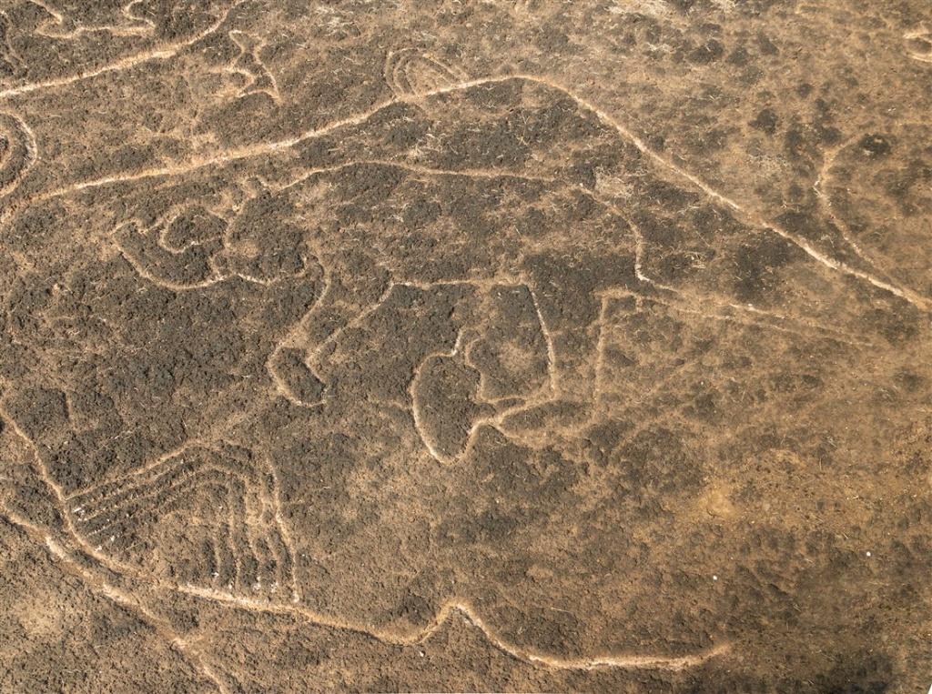 Rhino, carved behind the rear leg of the elephant - Kasheli petroglyphs