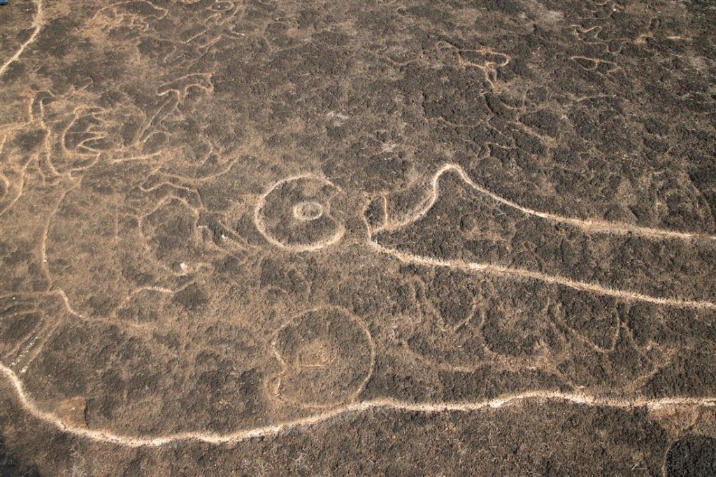 Elephant head with animal carvings within - Kasheli petroglyphs
