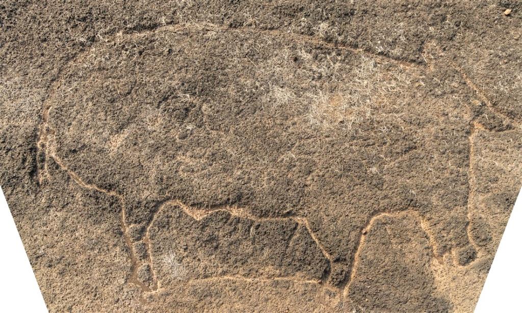 Headless hippo ? - Kasheli petroglyphs